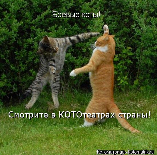 Котоматрица: Боевые коты! Смотрите в КОТОтеатрах страны!