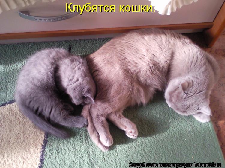 Котоматрица: Клубятся кошки.