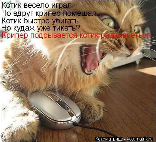 Котоматрица: Котик весело играл Но вдруг крипер помешал... Котик быстро убигать Но кудаж уже тикать? Крипер подрывается,котик разрываеться