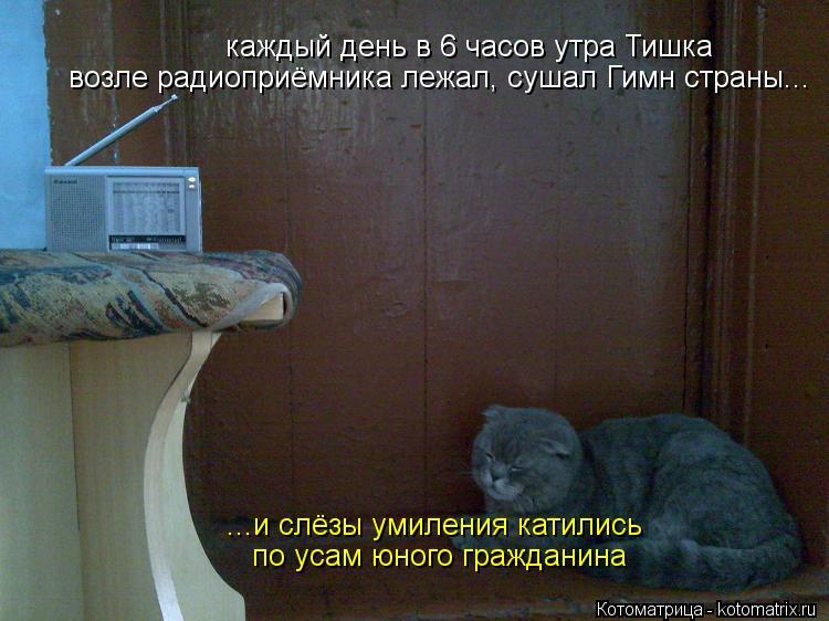 Котоматрица: каждый день в 6 часов утра Тишка возле радиоприёмника лежал, сушал Гимн страны... ...и слёзы умиления катились по усам юного гражданина