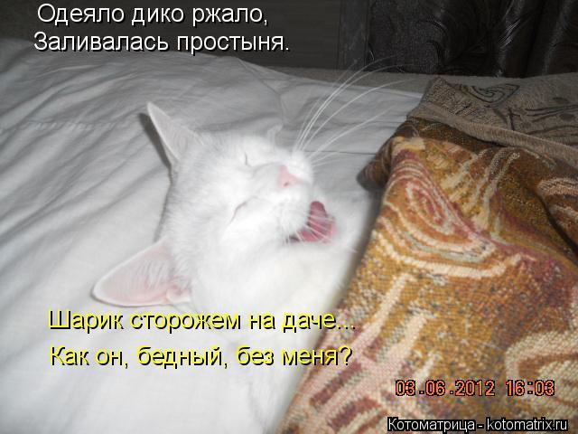 Котоматрица: Одеяло дико ржало, Заливалась простыня. Шарик сторожем на даче... Как он, бедный, без меня?