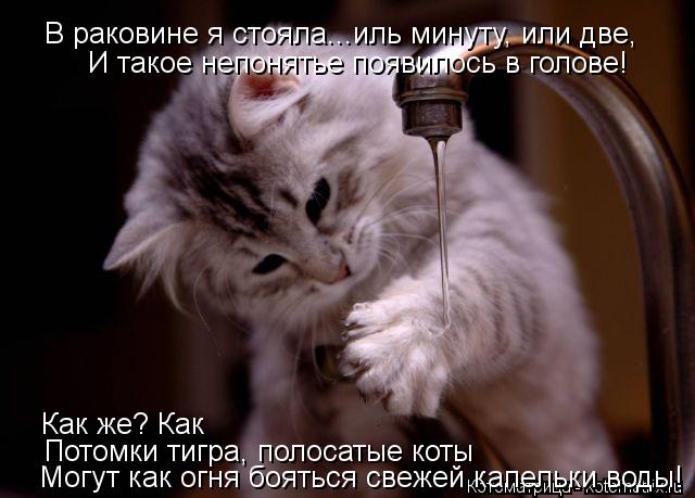 Котоматрица: В раковине я стояла...иль минуту, или две, И такое непонятье появилось в голове! Как же? Как Потомки тигра, полосатые коты Могут как огня боять