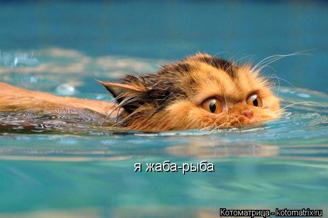 Котоматрица: я жаба-рыба