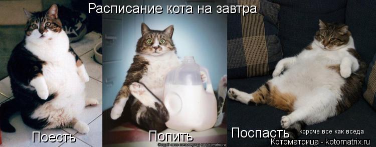 Котоматрица: Расписание кота на завтра Поесть Попить Поспасть  короче все как вседа