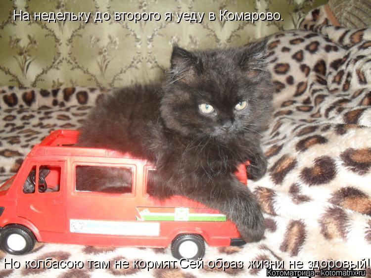 Котоматрица: На недельку до второго я уеду в Комарово. Но колбасою там не кормят.Сей образ жизни не здоровый!
