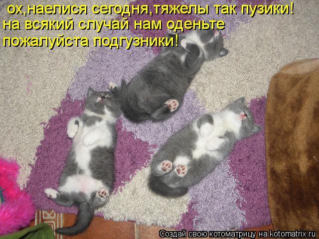 Котоматрица: ох,наелися сегодня,тяжелы так пузики! на всякий случай нам оденьте пожалуйста подгузники!
