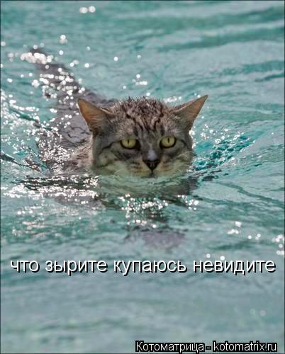 Котоматрица: что зырите купаюсь невидите