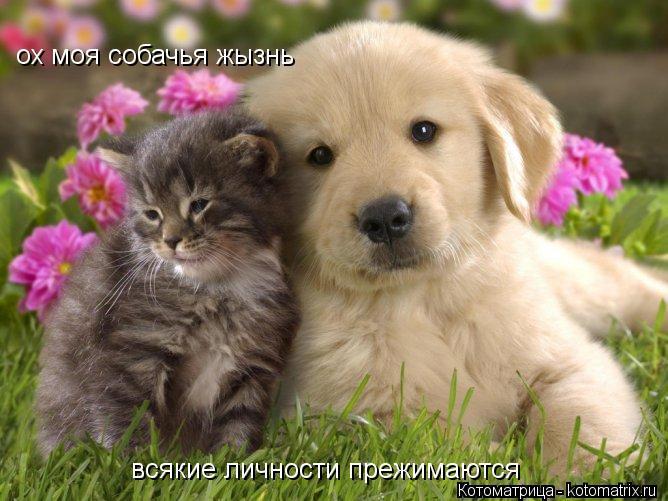 Котоматрица: ох моя собачья жызнь  всякие личности прежимаются всякие личности прежимаются