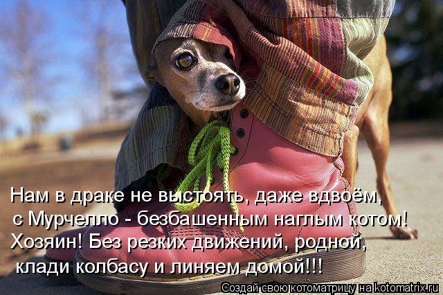 Котоматрица: с Мурчелло - безбашенным наглым котом! Хозяин! Без резких движений, родной, клади колбасу и линяем домой!!! Нам в драке не выстоять, даже вдвоё