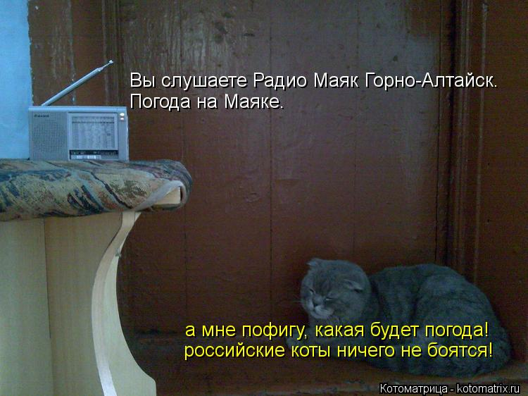 Котоматрица: Вы слушаете Радио Маяк Горно-Алтайск. Погода на Маяке. а мне пофигу, какая будет погода! российские коты ничего не боятся!