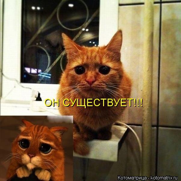 Котоматрица: ОН СУЩЕСТВУЕТ!!!