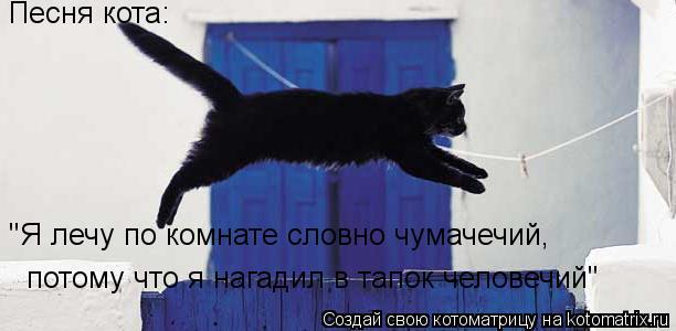 """Котоматрица: Песня кота: """"Я лечу по комнате словно чумачечий,  потому что я нагадил в тапок человечий"""""""