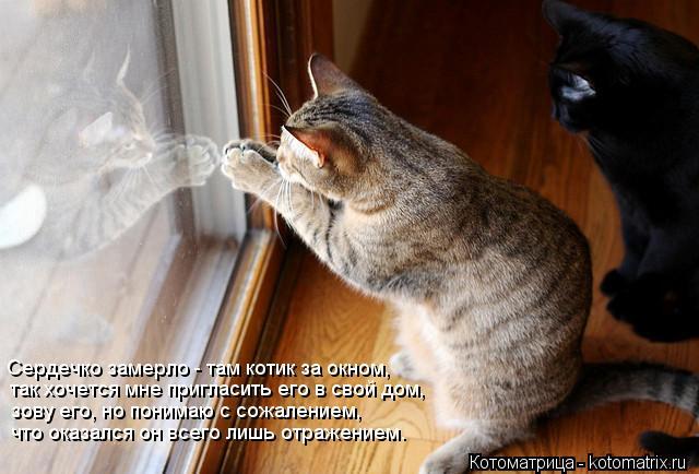 Котоматрица: Сердечко замерло - там котик за окном, так хочется мне пригласить его в свой дом, зову его, но понимаю с сожалением, что оказался он всего лиш
