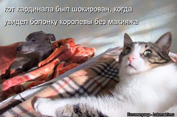 Котоматрица: кот кардинала был шокирован, когда  увидел болонку королевы без макияжа