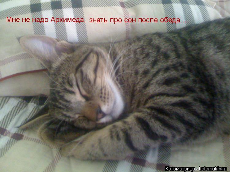 Котоматрица: Мне не надо Архимеда, знать про сон после обеда ...