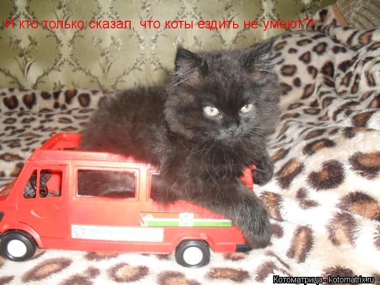 Котоматрица: И кто только сказал, что коты ездить не умеют?!