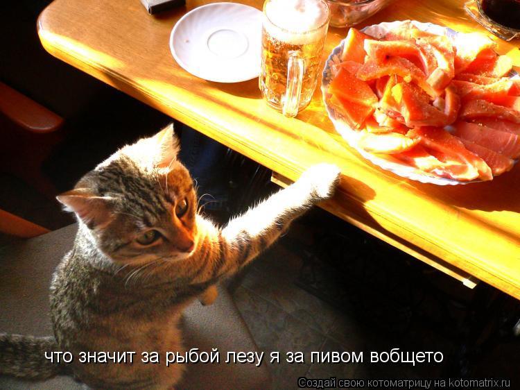 Котоматрица: что значит за рыбой лезу я за пивом вобщето