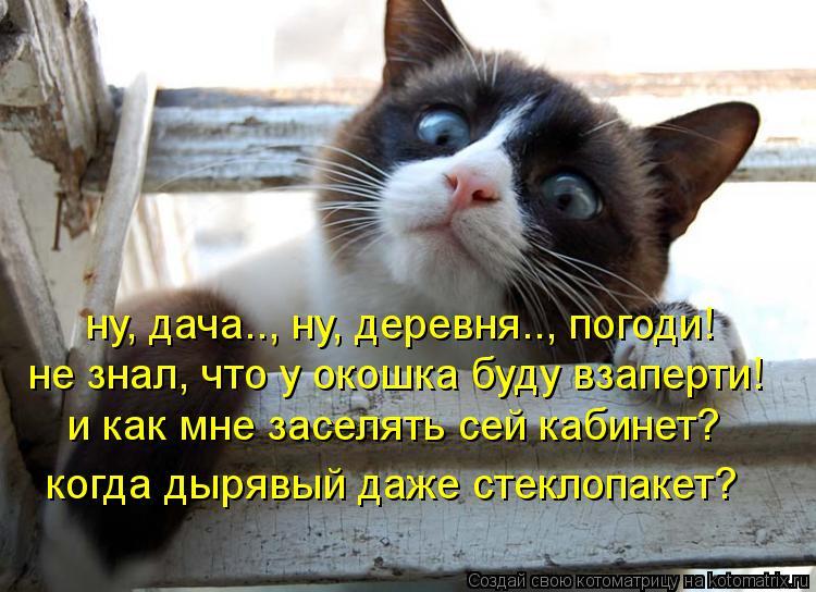 Котоматрица: ну, дача.., ну, деревня.., погоди! не знал, что у окошка буду взаперти! и как мне заселять сей кабинет? когда дырявый даже стеклопакет?