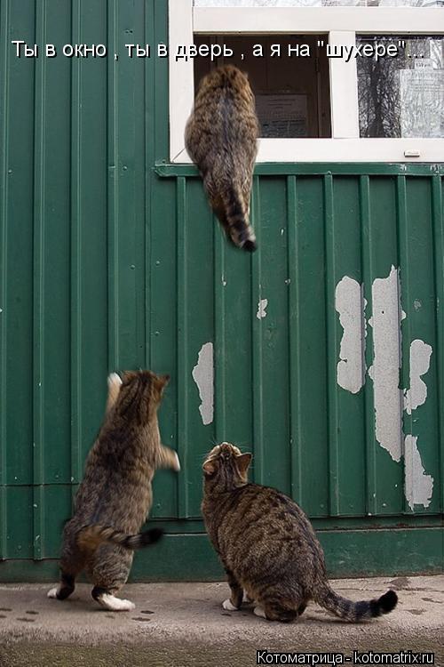 """Котоматрица: Ты в окно , ты в дверь , а я на """"шухере""""..."""