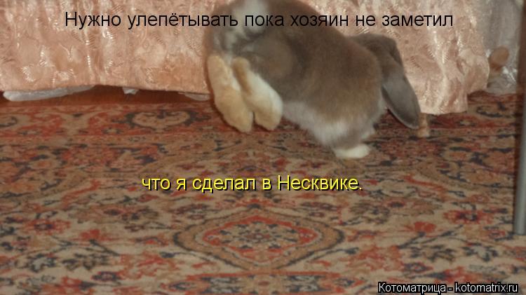 Котоматрица: Нужно улепётывать пока хозяин не заметил  что я сделал в Несквике.