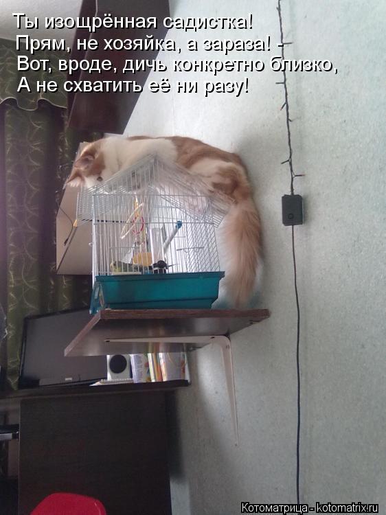 Госпожа садистка ярославль 1 фотография