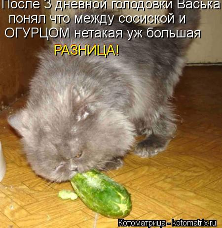 Котоматрица: После 3 дневной голодовки Васька  понял что между сосиской и  ОГУРЦОМ нетакая уж большая  РАЗНИЦА! РАЗНИЦА!