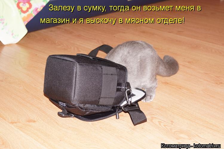 Котоматрица: Залезу в сумку, тогда он возьмет меня в магазин и я выскочу в мясном отделе!