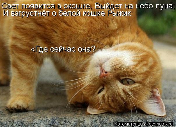Котоматрица: Свет появится в окошке, Выйдет на небо луна; И взгрустнёт о белой кошке Рыжик:  «Где сейчас она?