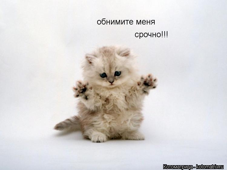 Котоматрица: обнимите меня срочно!!!