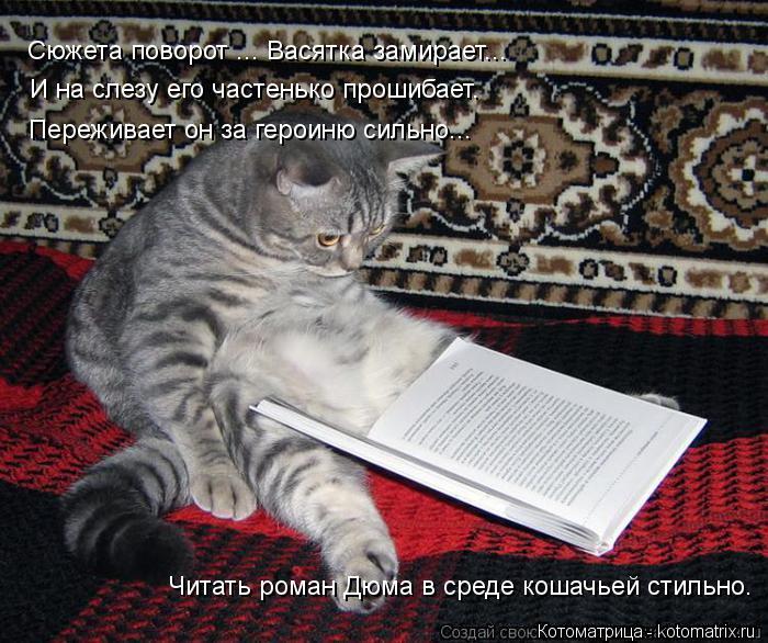 Котоматрица: Сюжета поворот ... Васятка замирает... И на слезу его частенько прошибает. Переживает он за героиню сильно... Читать роман Дюма в среде кошачье