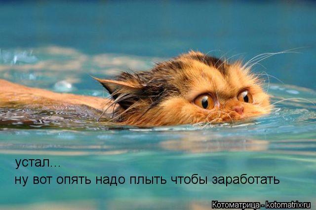 Котоматрица: ну вот опять надо плыть чтобы заработать  устал...