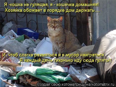 Котоматрица: Я -кошка не гулящая, я - кошечка домашняя! Хозяйка обожает в порядке дом держать.... И, чтоб слегка размяться и в мусор наиграться, Я каждый ден