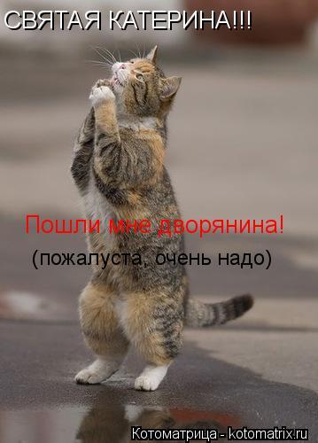 Котоматрица: СВЯТАЯ КАТЕРИНА!!! Пошли мне дворянина!  (пожалуста, очень надо)