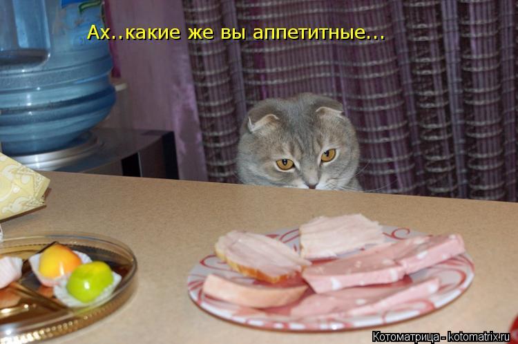 Котоматрица: Ах..какие же вы аппетитные...