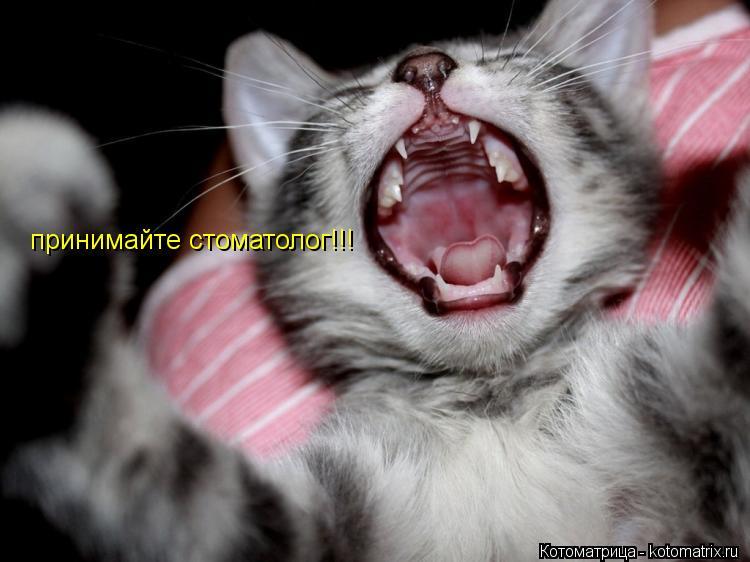 Котоматрица: принимайте стоматолог!!!