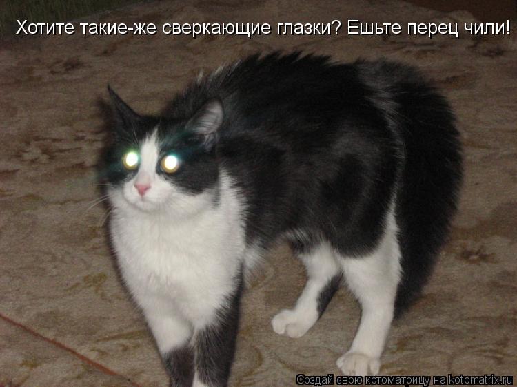 Котоматрица: Хотите такие-же сверкающие глазки? Ешьте перец чили!