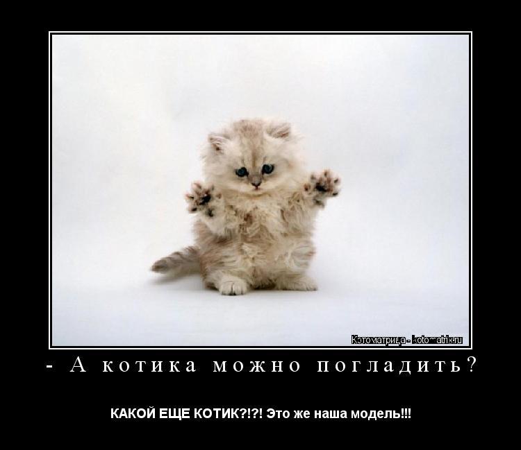 Котоматрица: - А котика можно погладить?   КАКОЙ ЕЩЕ КОТИК?!?! Это же наша модель!!!