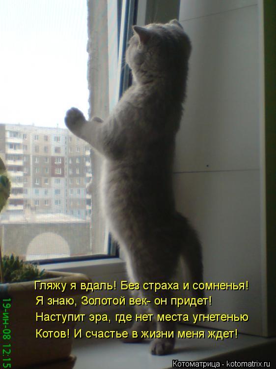 Котоматрица: Гляжу я вдаль! Без страха и сомненья! Я знаю, Золотой век- он придет! Наступит эра, где нет места угнетенью Котов! И счастье в жизни меня ждет!