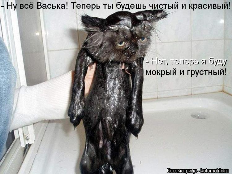Котоматрица: - Ну всё Васька! Теперь ты будешь чистый и красивый! - Нет, теперь я буду мокрый и грустный!