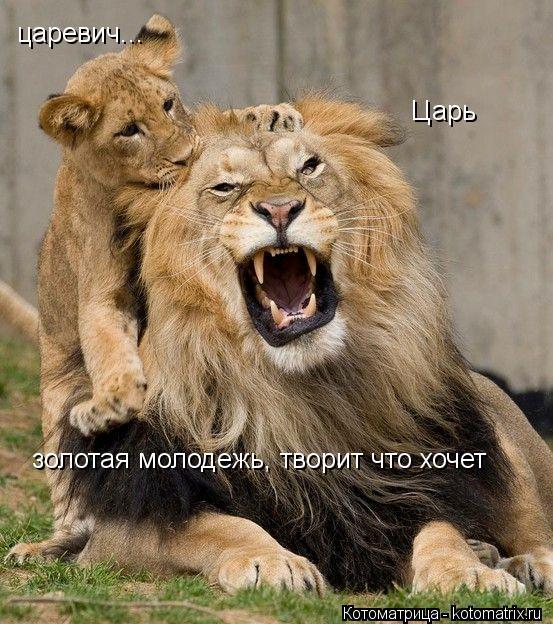 Котоматрица: Царь  царевич... золотая молодежь, творит что хочет