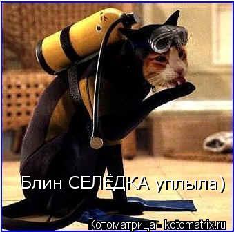 Котоматрица: Блин СЕЛЁДКА уплыла)