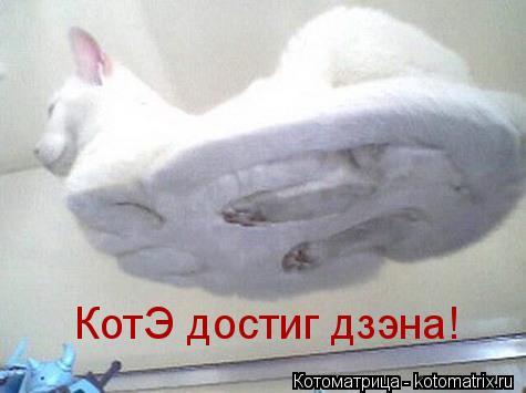 Котоматрица: КотЭ достиг дзэна!