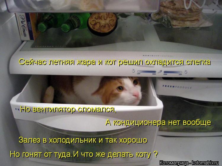 Котоматрица: Сейчас летняя жара и кот решил охладится слегка Но вентилятор сломался,  А кондиционера нет вообще Залез в холодильник и так хорошо Но гоня