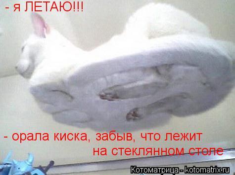 Котоматрица: - я ЛЕТАЮ!!! - орала киска, забыв, что лежит  на стеклянном столе