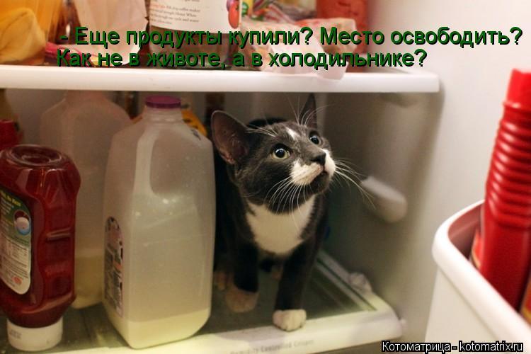 Котоматрица: - Еще продукты купили? Место освободить? Как не в животе, а в холодильнике?