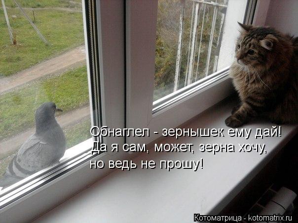 Котоматрица: Обнаглел - зернышек ему дай! Да я сам, может, зерна хочу, но ведь не прошу!