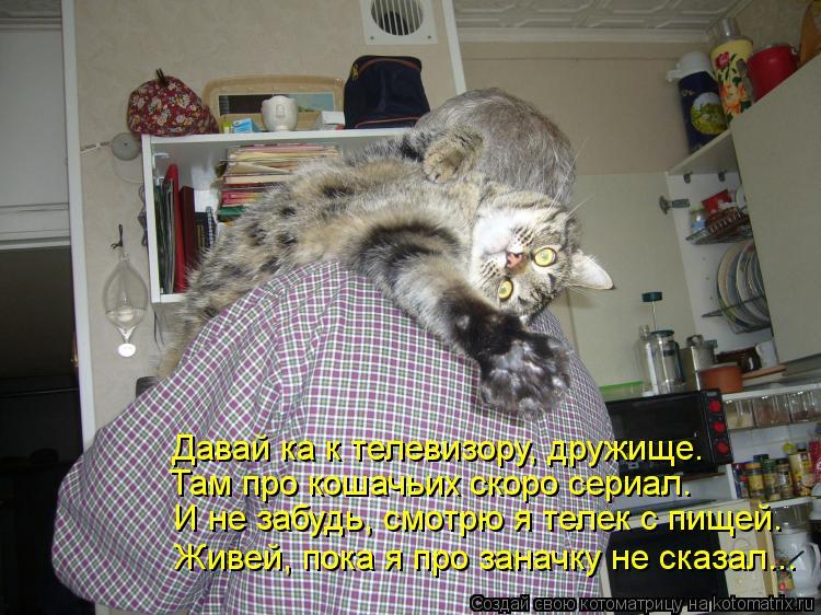 Котоматрица: Там про кошачьих скоро сериал. Давай ка к телевизору, дружище. И не забудь, смотрю я телек с пищей. Живей, пока я про заначку не сказал...