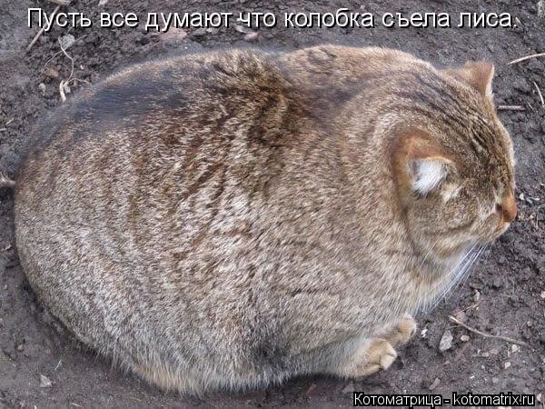 Котоматрица: Пусть все думают что колобка съела лиса.