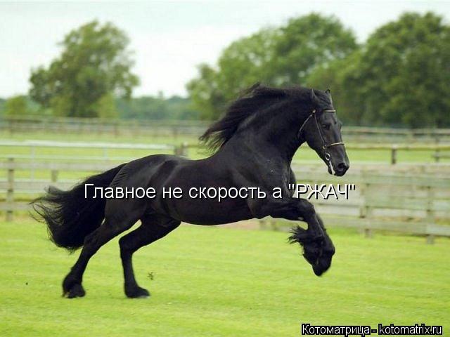 "Котоматрица: Главное не скорость а ""РЖАЧ"""