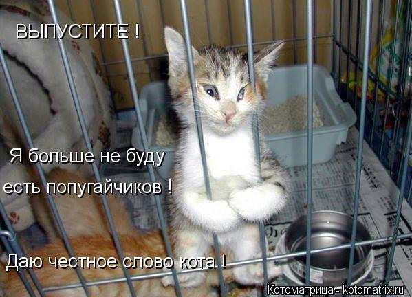 Котоматрица: ВЫПУСТИТЕ ! Я больше не буду есть попугайчиков ! Даю честное слово кота !